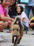 monkey ridding pig